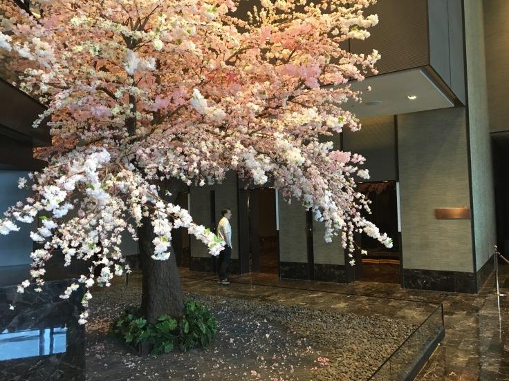 bangkok okura prestige cherry tree