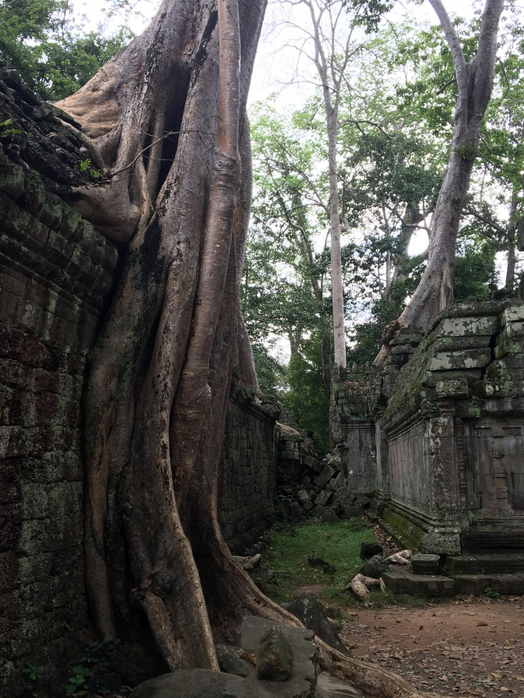 siem reap angkor wat ta prohm overwhelming tree