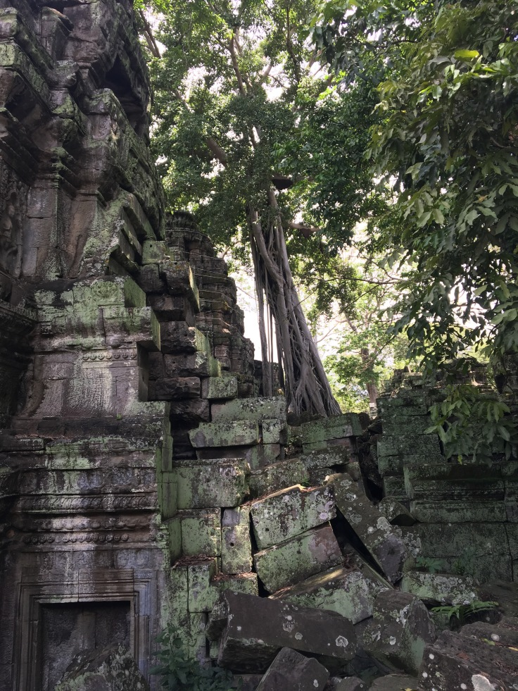 siem reap angkor wat ta prohm ruins meet the trees